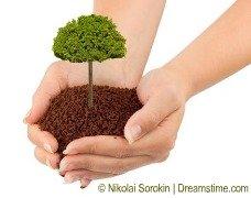 holding bonsai tree