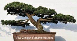 Types Of Bonsai Trees